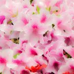 神代植物公園のツツジ2018!見ごろ・開花はいつ?ランチは深大寺そばで決まり!