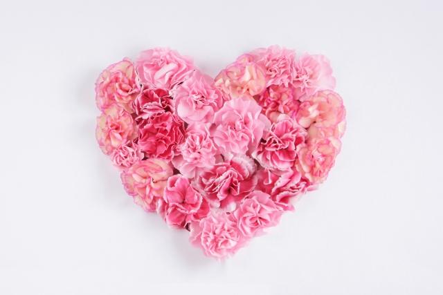 カーネーションの花言葉は色別で違う!今年の母の日はどれにする?